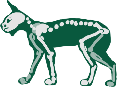 Skeletal diagram of Malta Akkoure